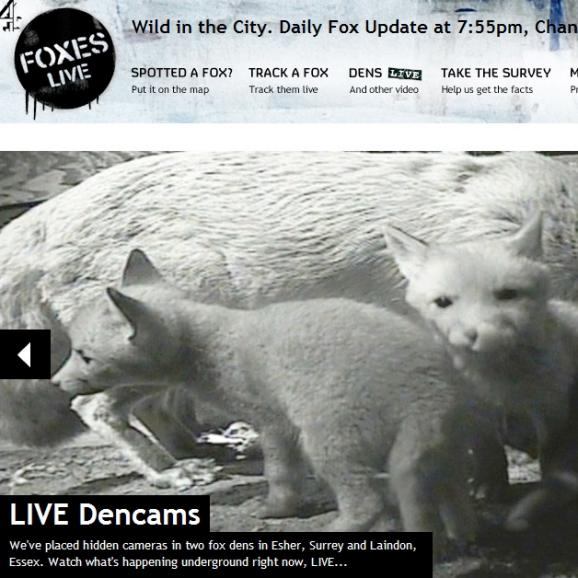 Channel 4's Foxes Live