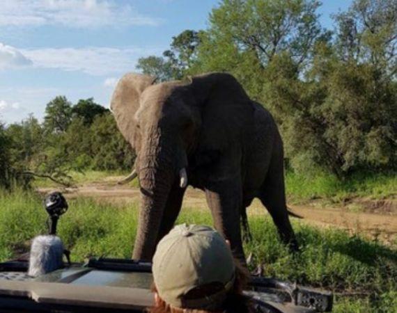 Biome Elephant Close Up